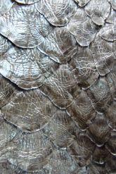 Оригинальный плащ  из натуральной замши с кожей питона. Фото 4.